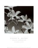 Orchid Denrobium