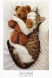 Le chat et son nounours Reproduction d'art