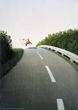 Porc de l'autoroute Reproduction d'art par Michael Sowa