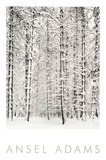 Pine Forest in the Snow, Yosemite National Park Reproduction d'art par Ansel Adams