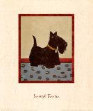 Scottish Terrier Reproduction d'art par Lanny Barnard