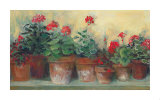 Kathleen&#39;s Geraniums