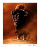 American Bison (LE)
