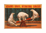 Adams Bros International Circus