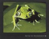 Maki Frog