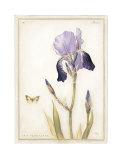 Purple Iris with Beard II