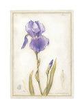 Purple Iris I