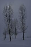 A Snowy Landscape Near Steamboat Springs