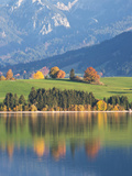 Autumn Trees Reflected in Forggensee in Bavaria
