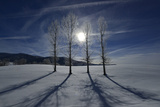 Backlit Trees Cast Shadows on a Winter Landscape