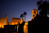 The Avenue of Sphinxes and Luxor Temple Illuminated at Night