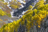 A Snow-blanketed Valley with Golden Aspen Trees and Evergreens