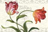 Tulipa Botanica I Cream