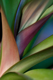 Abstract Floral of a Bird of Paradise Plant Papier Photo par Vickie Lewis