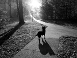 A Pet Dog on a Sidewalk Looks Down a Hill in the Early Morning