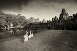 Geese Walk on the Grounds of the 12th Century Temple  Bayon