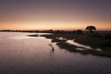 The Chobe River and Its Silhouetted Shoreline at Sunset