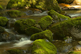 Moss Covered Rocks in the Piney River