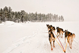 Dog Sledding Across Frozen Lakes in Jokkmokk  Swedish Lapland