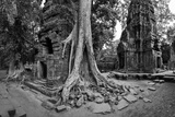 Lichen and Strangler Fig Trees Engulf Temple Ruins at Ta Prohm Temple
