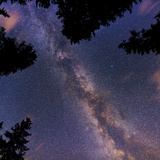 The Summer Milky Way and Stars Above Silhouetted Evergreen Trees