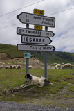 A Sheep Herding Dog Resting Under Roadside Directional Signs
