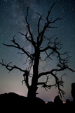 A Gnarly Tree in Silhouette Against the Milky Way in Arches National Park