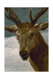 Head of a Stag  1634  Spanish Baroque