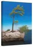 Ken Kirsch 'Tree Rock' Wrapped Canvas