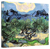 Vincent van Gogh 'Olive Trees' Wrapped Canvas Art