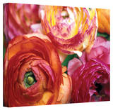 Kathy Yates 'Ranunculus Close-up' Canvas Art
