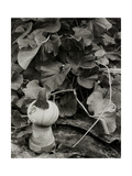 Pumpkin Growing in Garden Surrounded by Plants