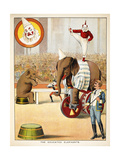The Educated Elephants' an Involving Elephants and Clowns in a Circus