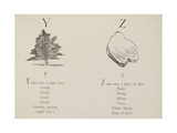 Yew Tree and Piece Of Zinc Illustrations and Verse From Nonsense Alphabets by Edward Lear