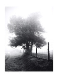 Tree in Mist Near Rivilen 1990 Drovers Roads  Wales