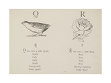 Quail and Rose Illustrations and Verse From Nonsense Alphabets by Edward Lear