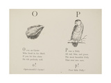 Oyster and Parrot Illustrations and Verse From Nonsense Alphabets by Edward Lear