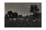 Moonlight  Avebury 1974 From the Ridgeway Series