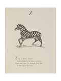 Zebra Illustrations and Verse From Nonsense Alphabets by Edward Lear