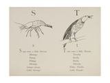 Shrimp and Thrush From Nonsense Alphabets Drawn and Written by Edward Lear