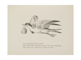 Grey Gull  Carrying Owl and Carpet Bag From a Collection Of Poems and Songs by Edward Lear