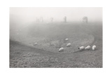Avebury  Mist With Sheep 1989