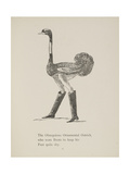 Ostrich Wearing Boots From a Collection Of Poems and Songs by Edward Lear