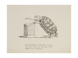 Tortoise Playing a Drum  Nonsense Botany Animals and Other Poems Written and Drawn by Edward Lear