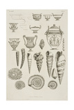 Illustration Of Shells and Ancient Vessels  As Patterns For Plasterwork Additions