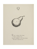 Quince Illustrations and Verses From Nonsense Alphabets Drawn and Written by Edward Lear