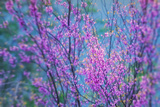Redbud River Abstract