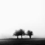 3 Trees in Fog Papier Photo par Rory Garforth