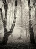Bracken Woods II