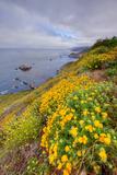 Coastal Flowerscape  Carmel